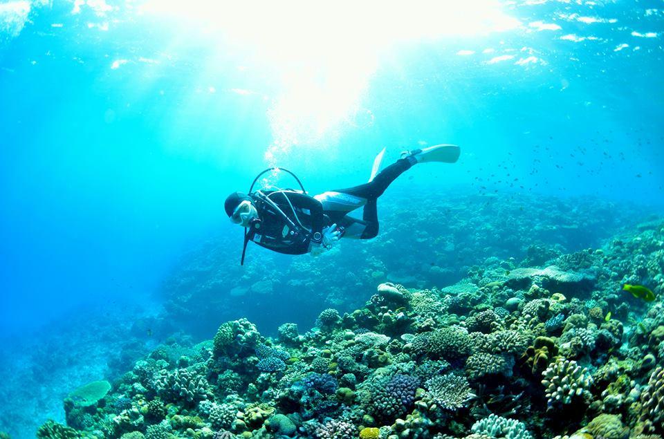 ダイバーと珊瑚礁