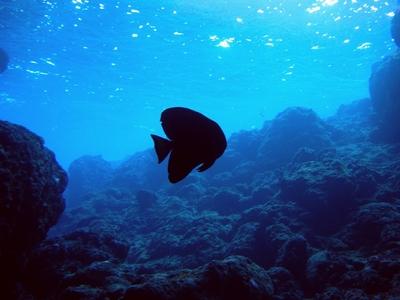 沖縄青の洞窟 この時期の幻想的な光とツバメウオ