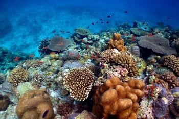 水納島・瀬底島・伊江島ダイビング 沖縄北部の離島