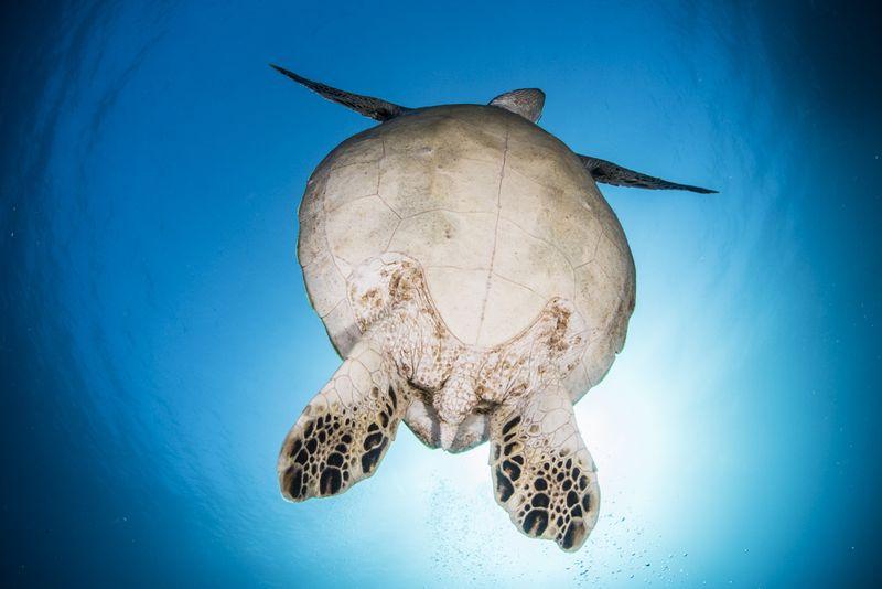 海亀の逆光写真