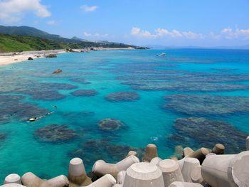 沖縄本島北部ゴリラチョップ
