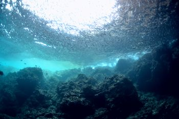 青の洞窟 数え切れない魚達の巨大な群れ