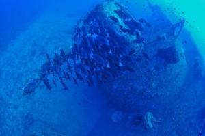 沖縄で1番綺麗なダイビングスポット