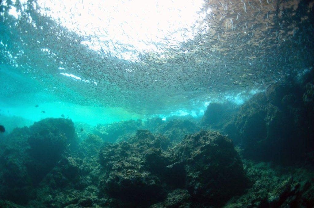 青の洞窟の水面に群れる魚達