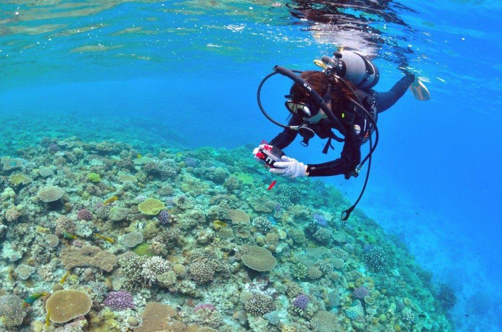 浅瀬に群生する珊瑚礁とダイバー