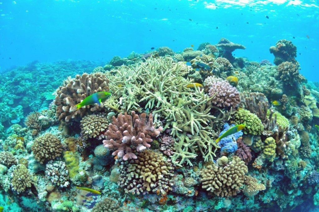 沖縄で一番綺麗な珊瑚礁の群生