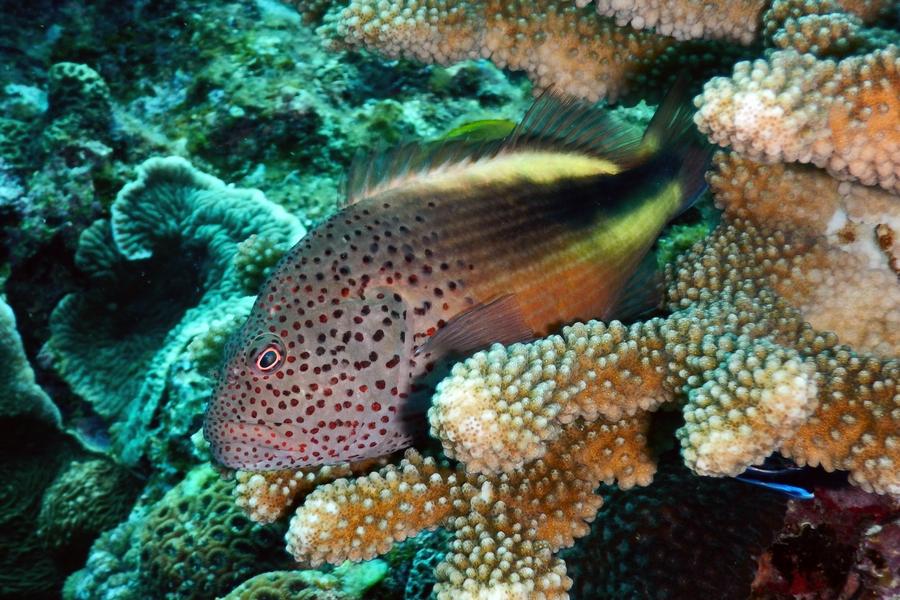 COOLPIX AW130 水中撮影例
