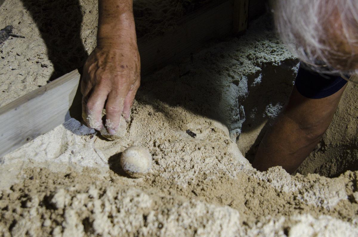 沖縄 海亀の卵