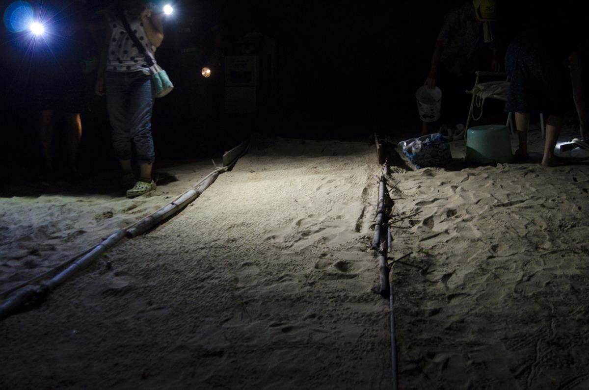 沖縄 海亀の孵化の道