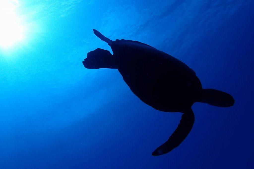 海亀のシルエット