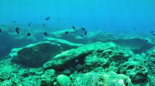 沖縄与那国 海底遺跡ダイビングツアー