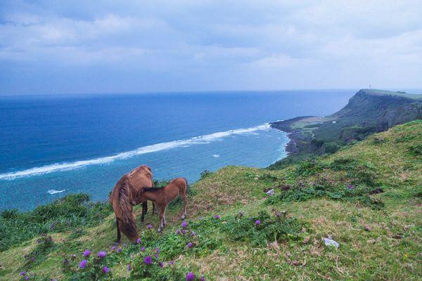 与那国遠征のため、12月16日、17日はお休みします。
