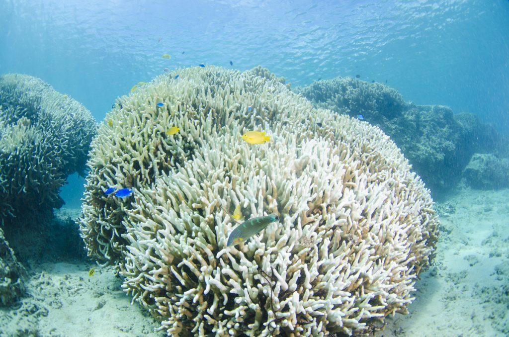 沖縄 珊瑚礁の白化現象 2