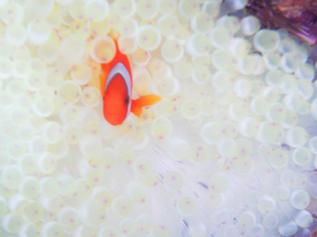 海でよく見る魚たち☆