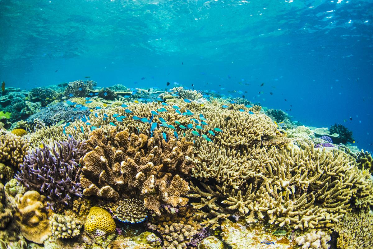 沖縄で1番綺麗な珊瑚礁の群生 水納島