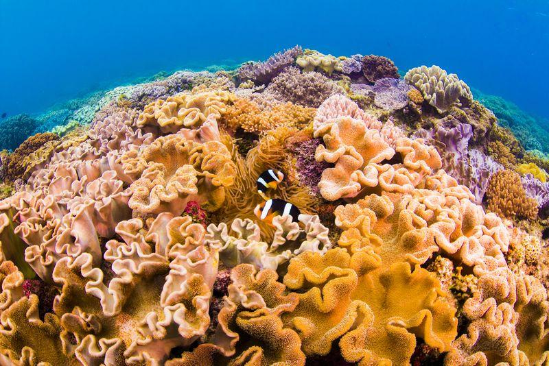 沖縄の都会に残る珊瑚礁の群生 北谷町の砂辺カリフォルニア