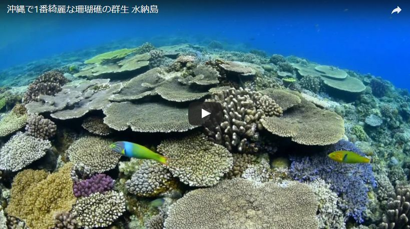 テレビ東京系日曜ビッグバラエティ「ニッポンの凄腕漁師2017」