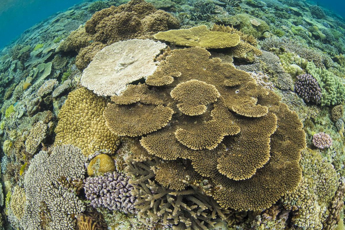 沖縄最後の秘境「水納島」で体験ダイビング