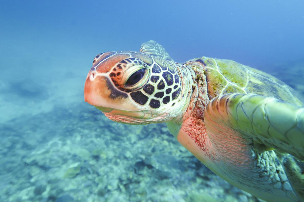 沖縄の秘境「水納島」