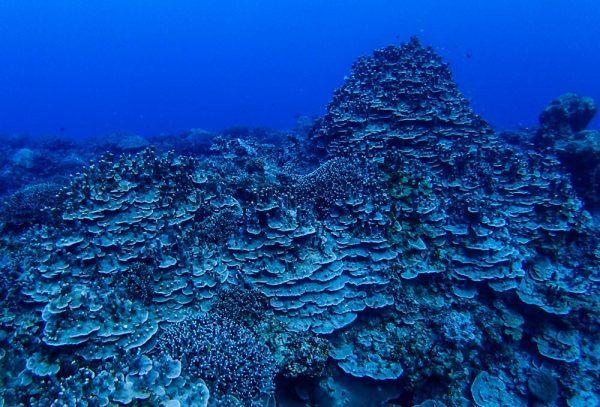 綺麗な珊瑚が魅力的な東海岸でボートダイビング