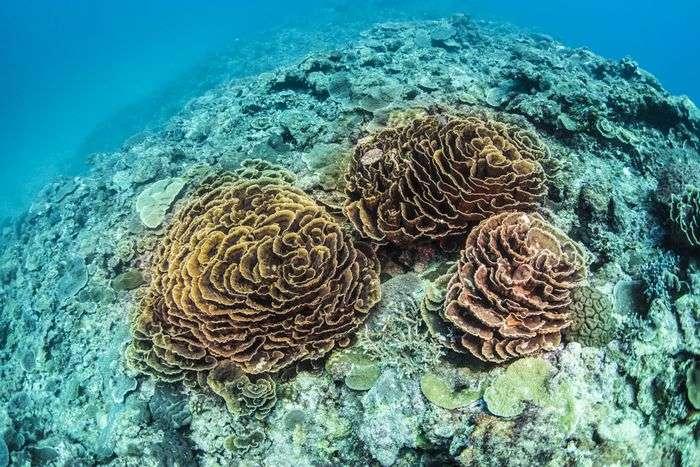沖縄の珊瑚の生態