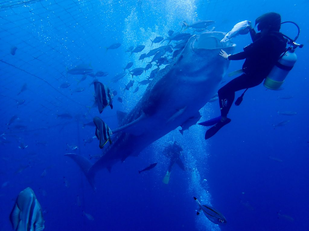 体験ダイビングでジンベイザメツアーに行ってきました!!