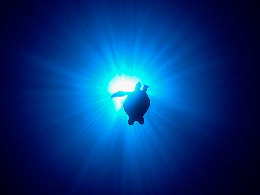 ケラマブルー 慶良間でダイビング