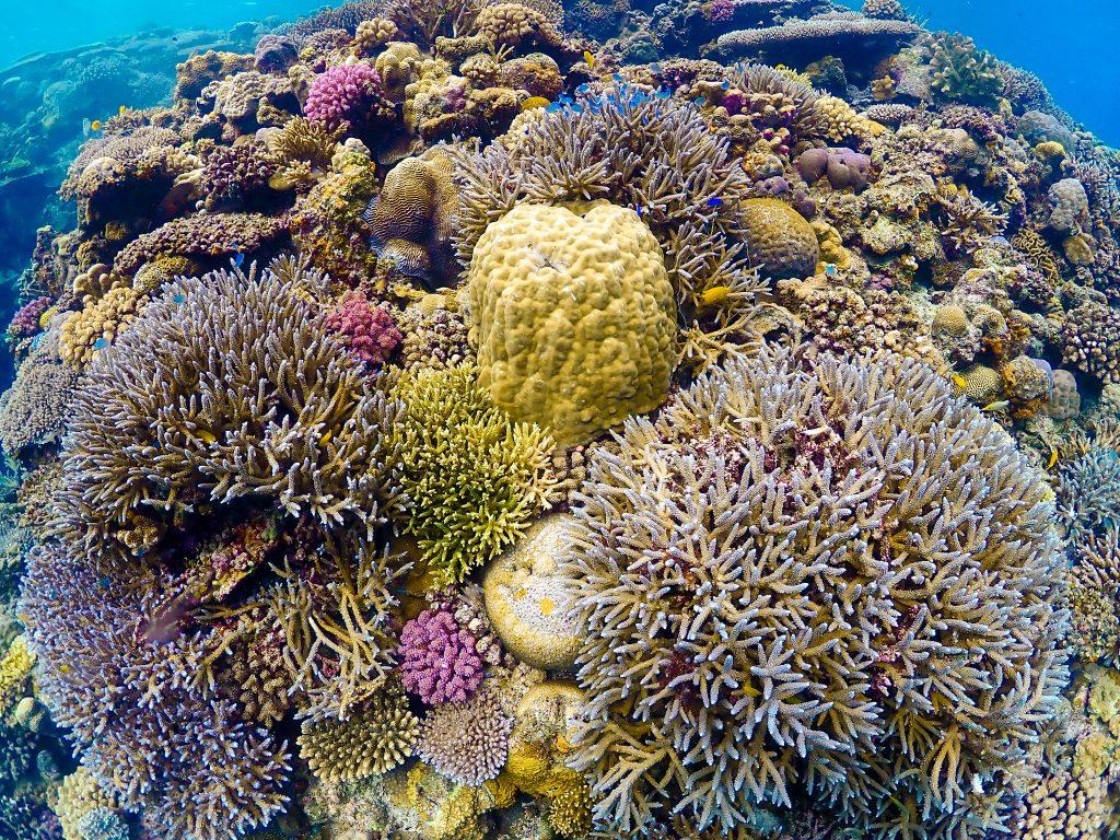 沖縄の綺麗なサンゴの群生 水納島