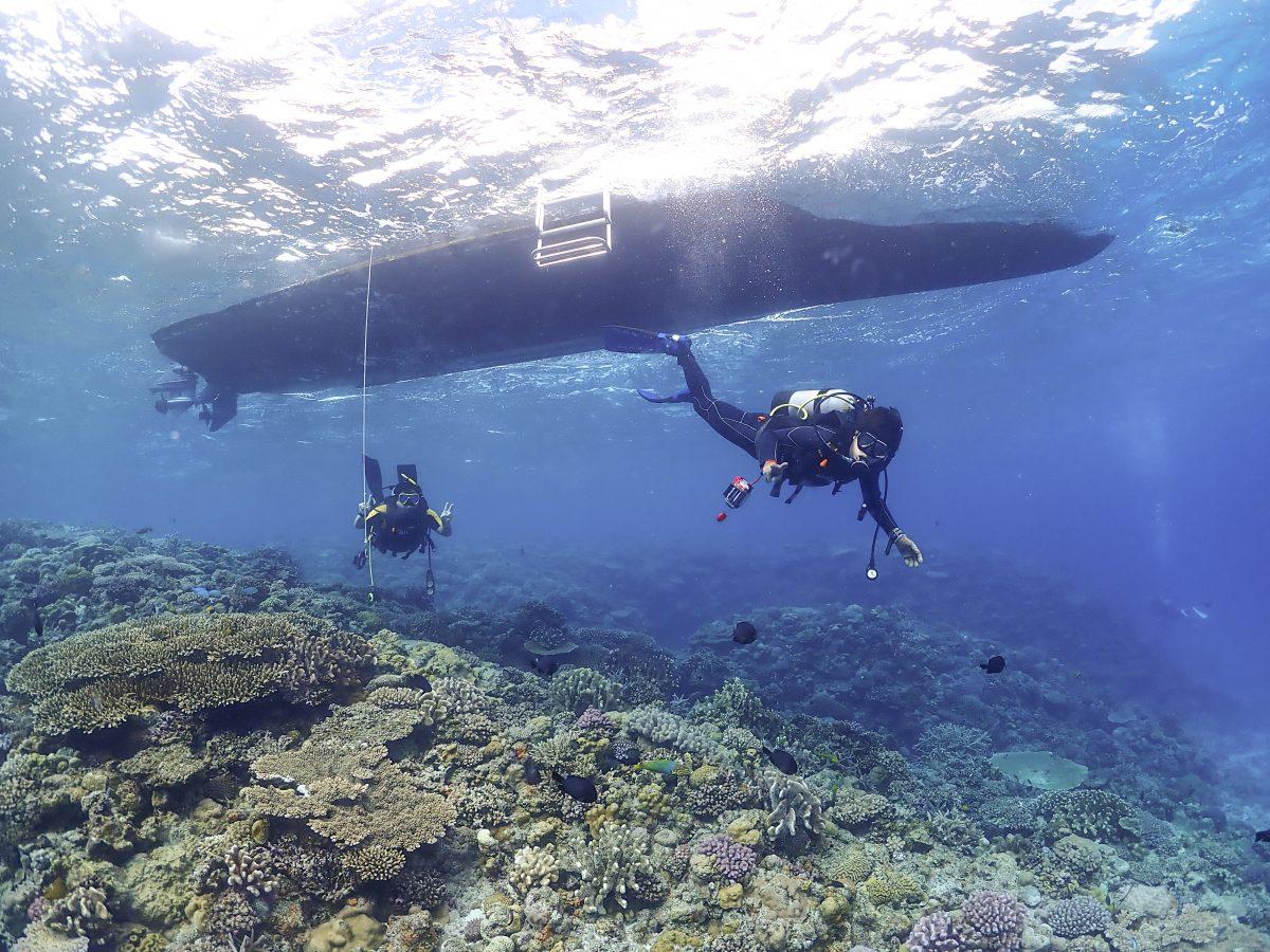 沖縄 離島 ダイビング