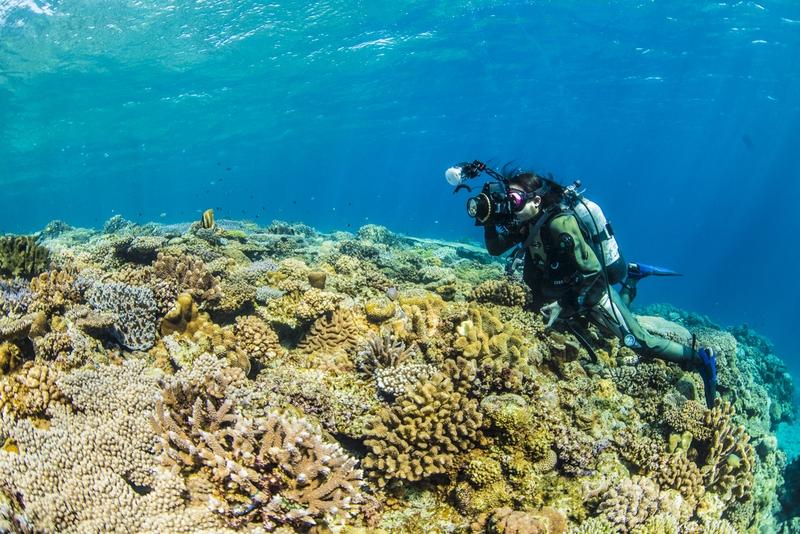 水納島の珊瑚を撮影する女性カメラマン