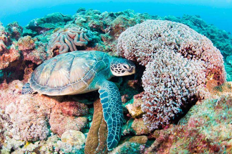 シークレットスポットのウミガメ