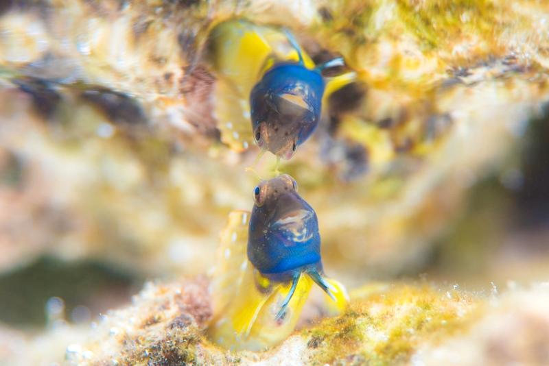 © 海の写真素材の無料(フリー)提供について