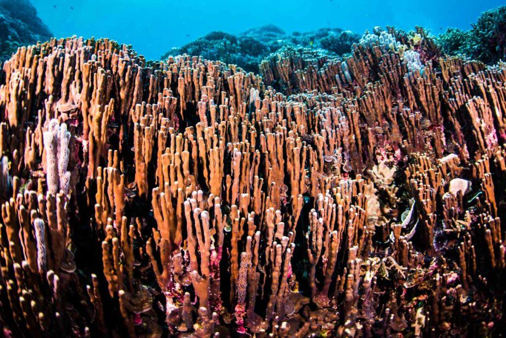 辺野古ダイビング・大浦湾【珊瑚の森】