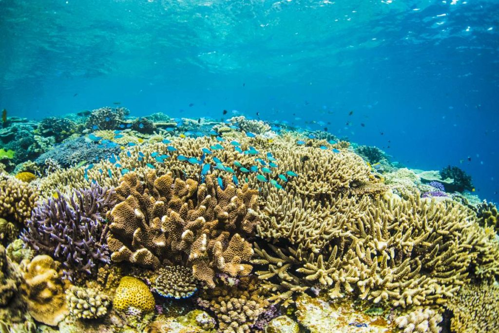 水納島ダイビング・透明度40Mの秘境