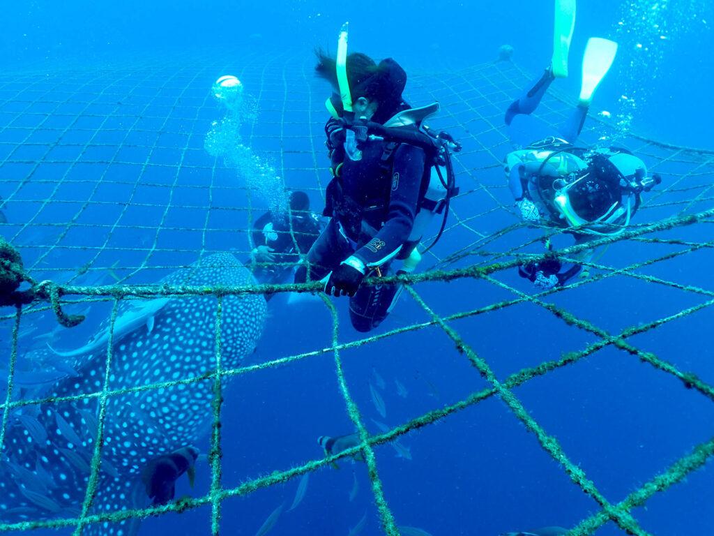 ジンベエザメ+青の洞窟(*´▽`*)「脅威の0距離!」沖縄体験ダイビング