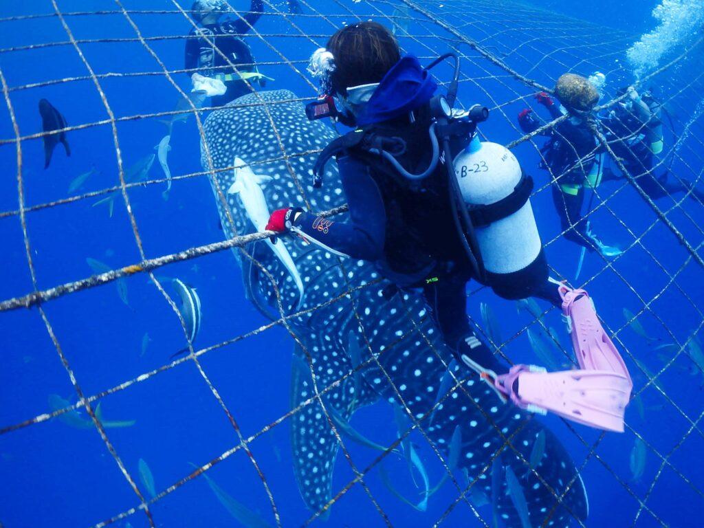 ジンベエザメの背に乗ってるかのよう!( *´艸`)体験ダイビング 沖縄