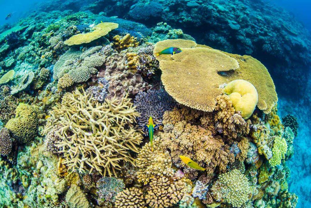 水納島の珊瑚