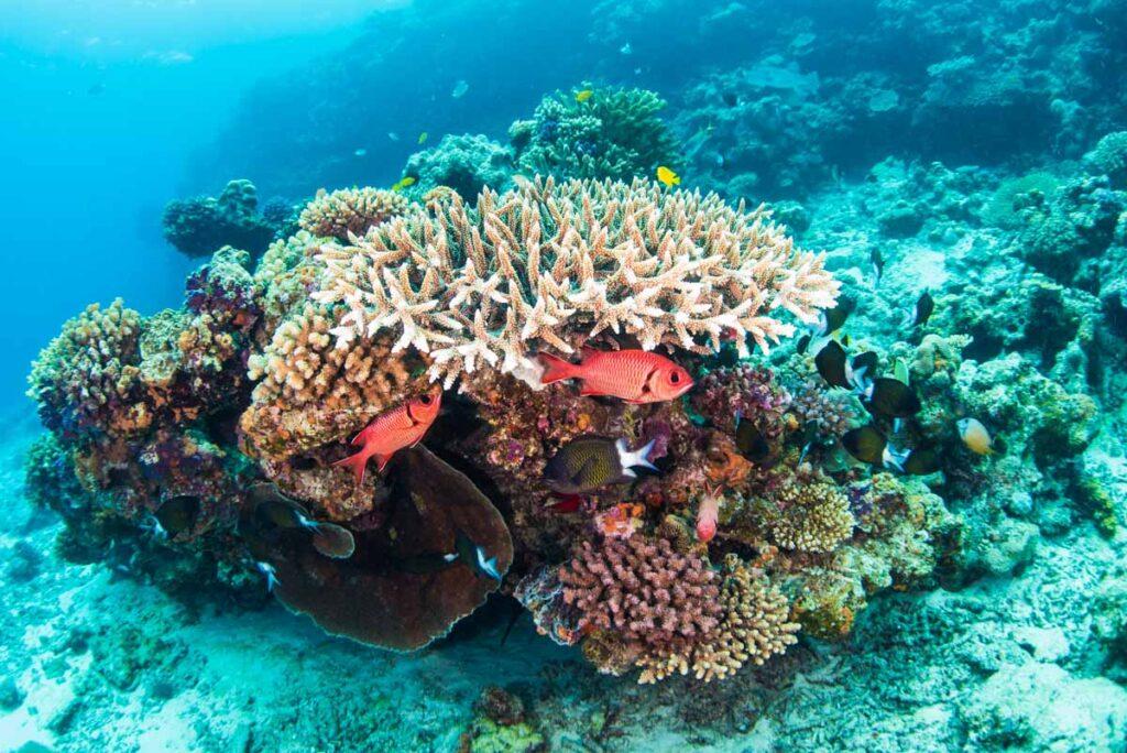 水納島・珊瑚に棲む魚達