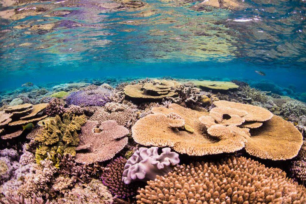 水面反射の珊瑚・沖縄