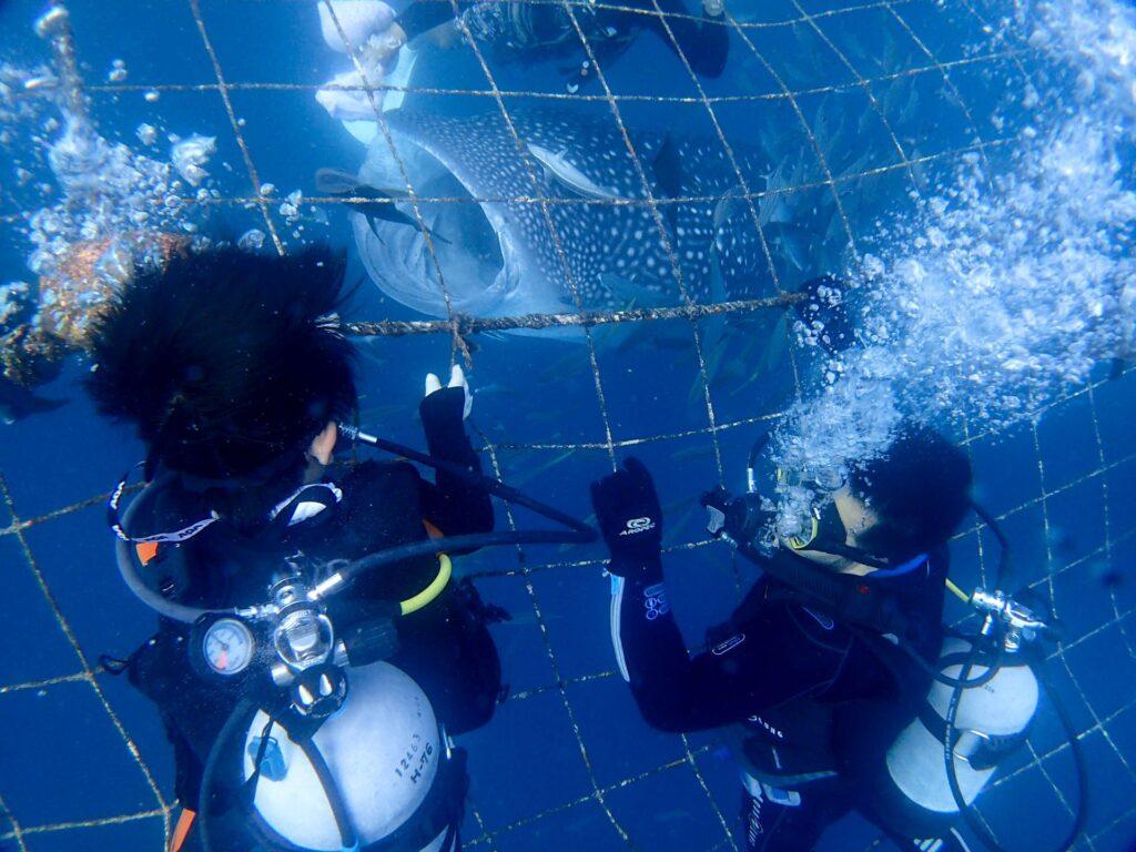 ジンベエザメ&青の洞窟セット 体験ダイビングで親子の思い出(^_-)-☆沖縄旅行